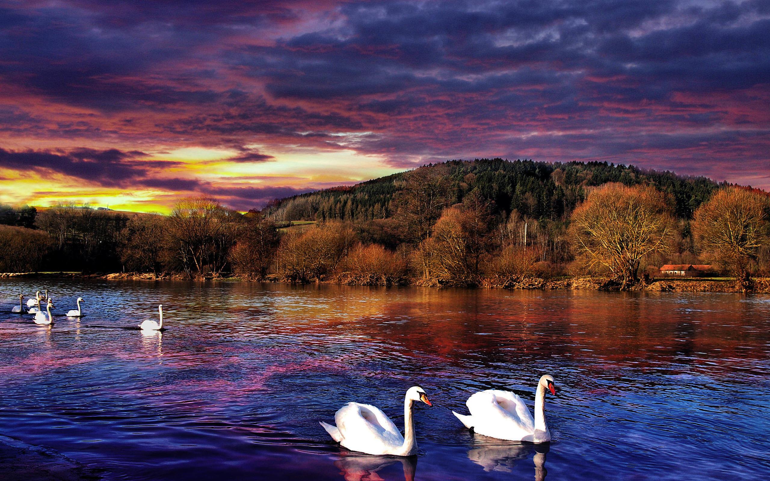 Река лебедь открытки, открытки