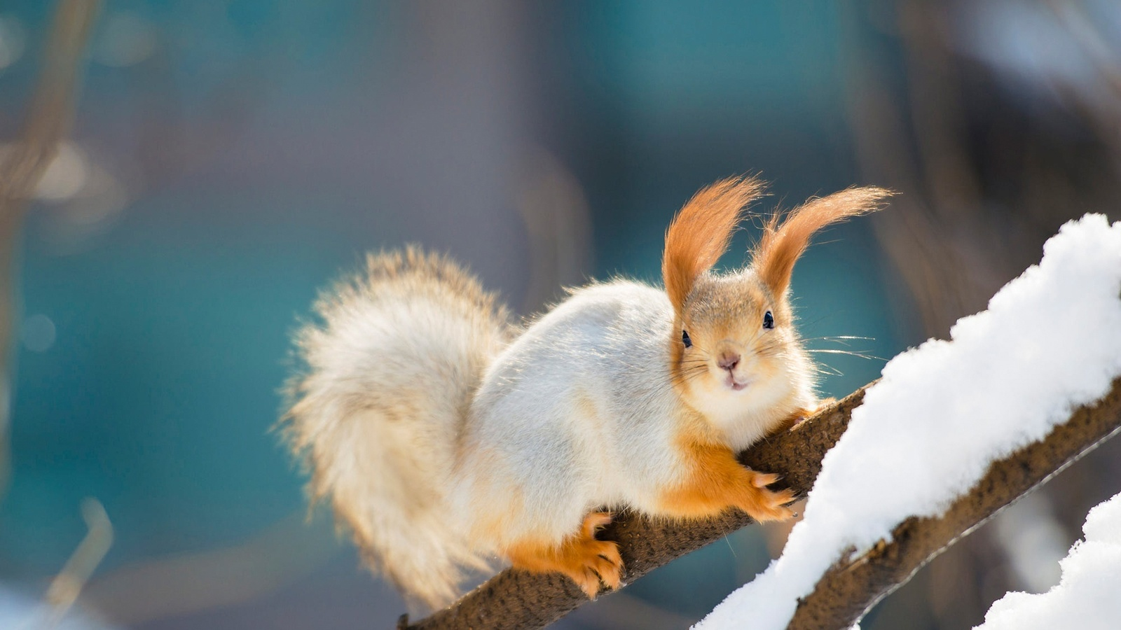 Фото открытки, картинки с добрым утром природа и животные
