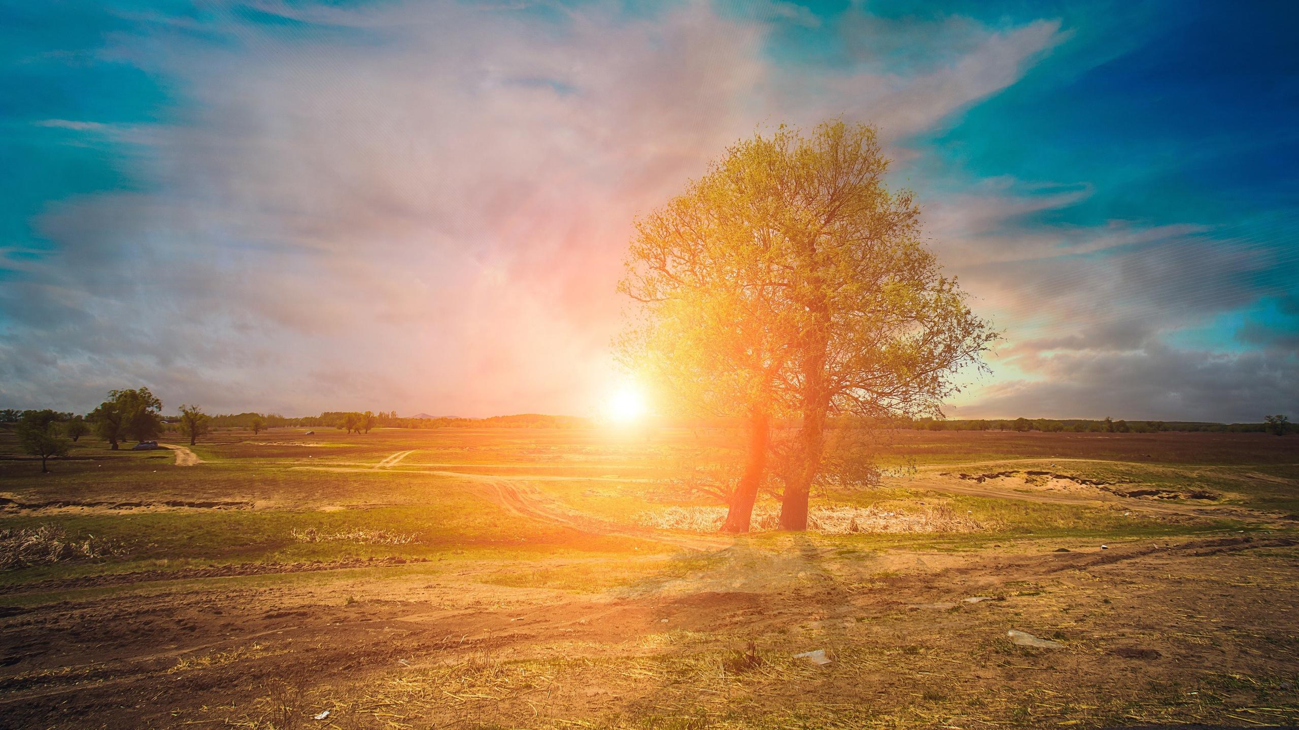 базанова потрясающий как фотографировать природу солнце странно, первого дерево