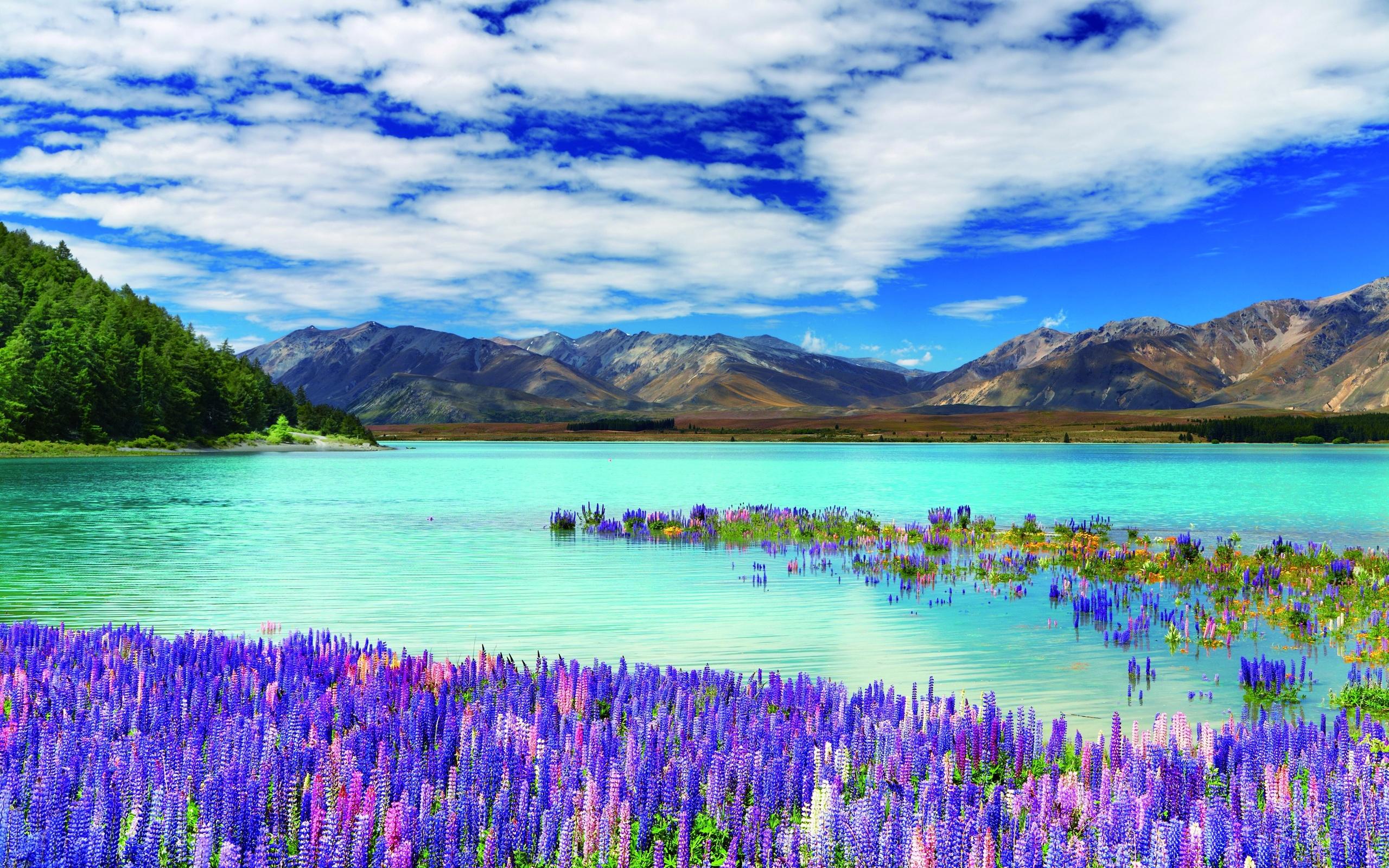 smotret-video-priroda-novoy-zelandii
