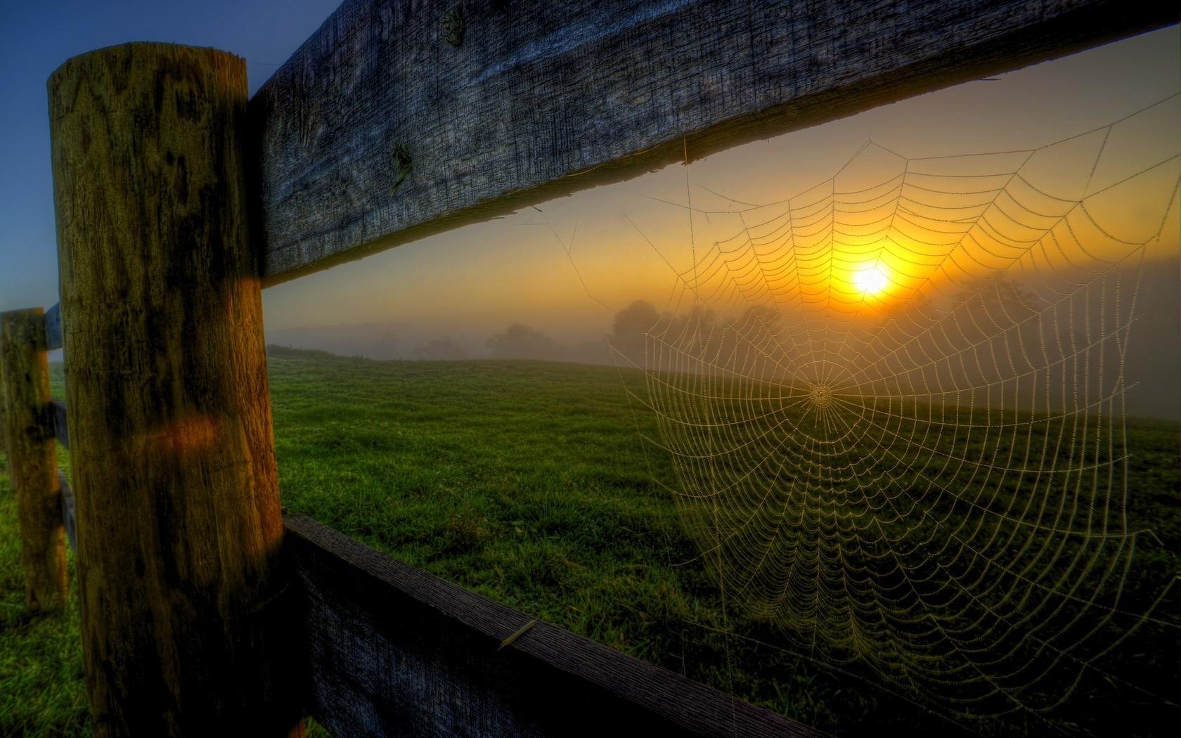 природа, пейзаж, поле, трава, забор, ограждение, паутина, вечер, закат, солнце