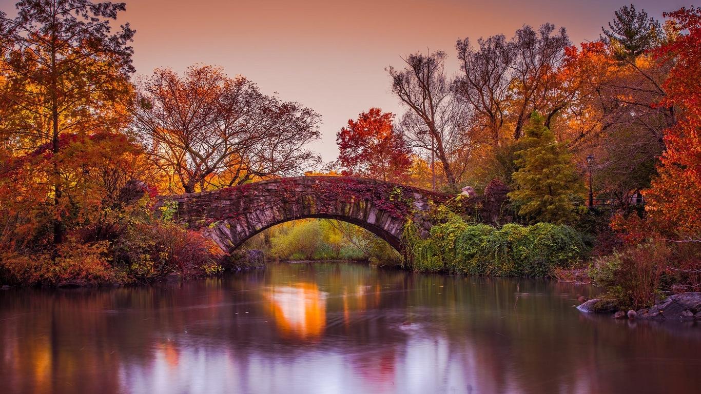 сша, нью-йорк, парк, природа, кусты, деревья, трава, пруд, мост, осень