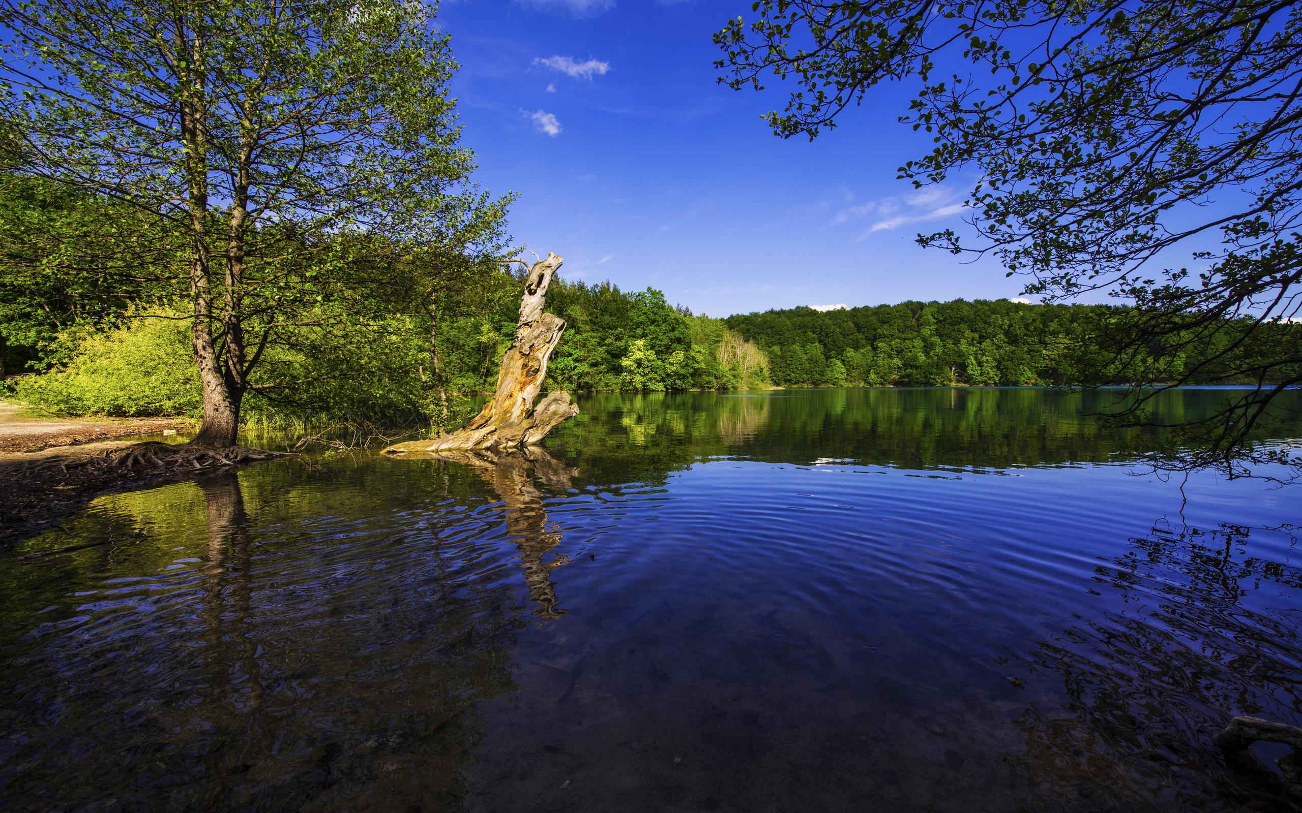 хорватия, озеро, plitvice lakes, national park, деревья, пень, природа