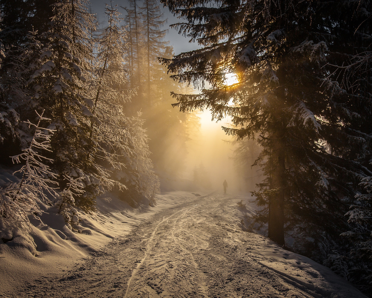 torsten muehlbacher, природа, зима, снег, лес, деревья, ели, дорога, солнце, свет