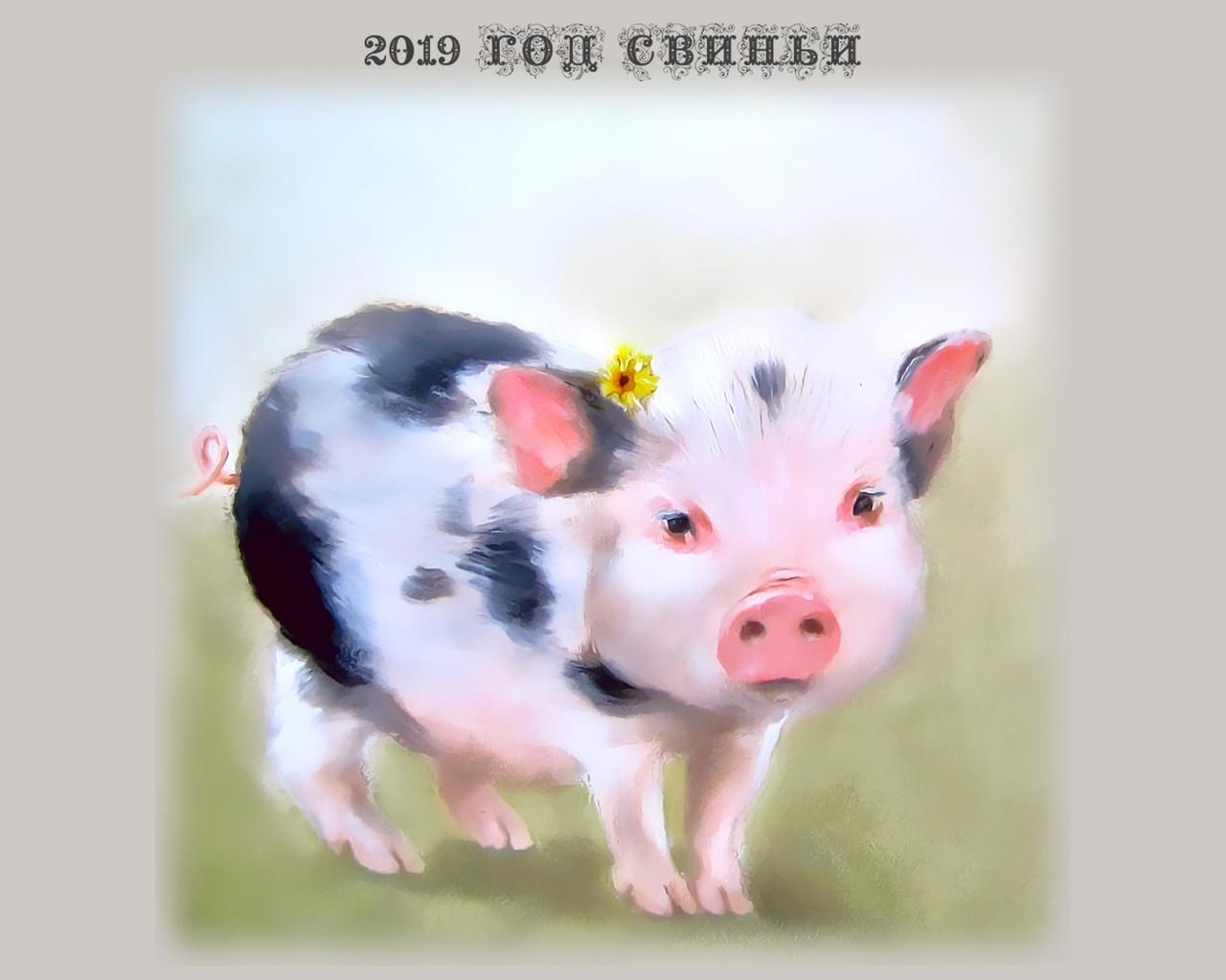 календарь, 2019, поросенок, свинья, цветок