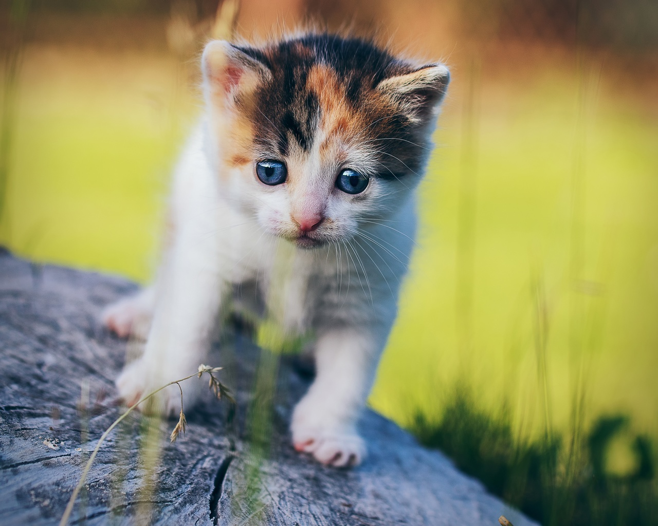 животное, котёнок, детёныш, малыш, природа, пень, трава