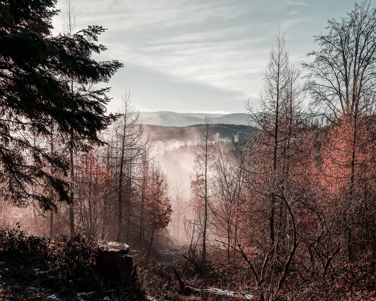 природа, деревья, туман