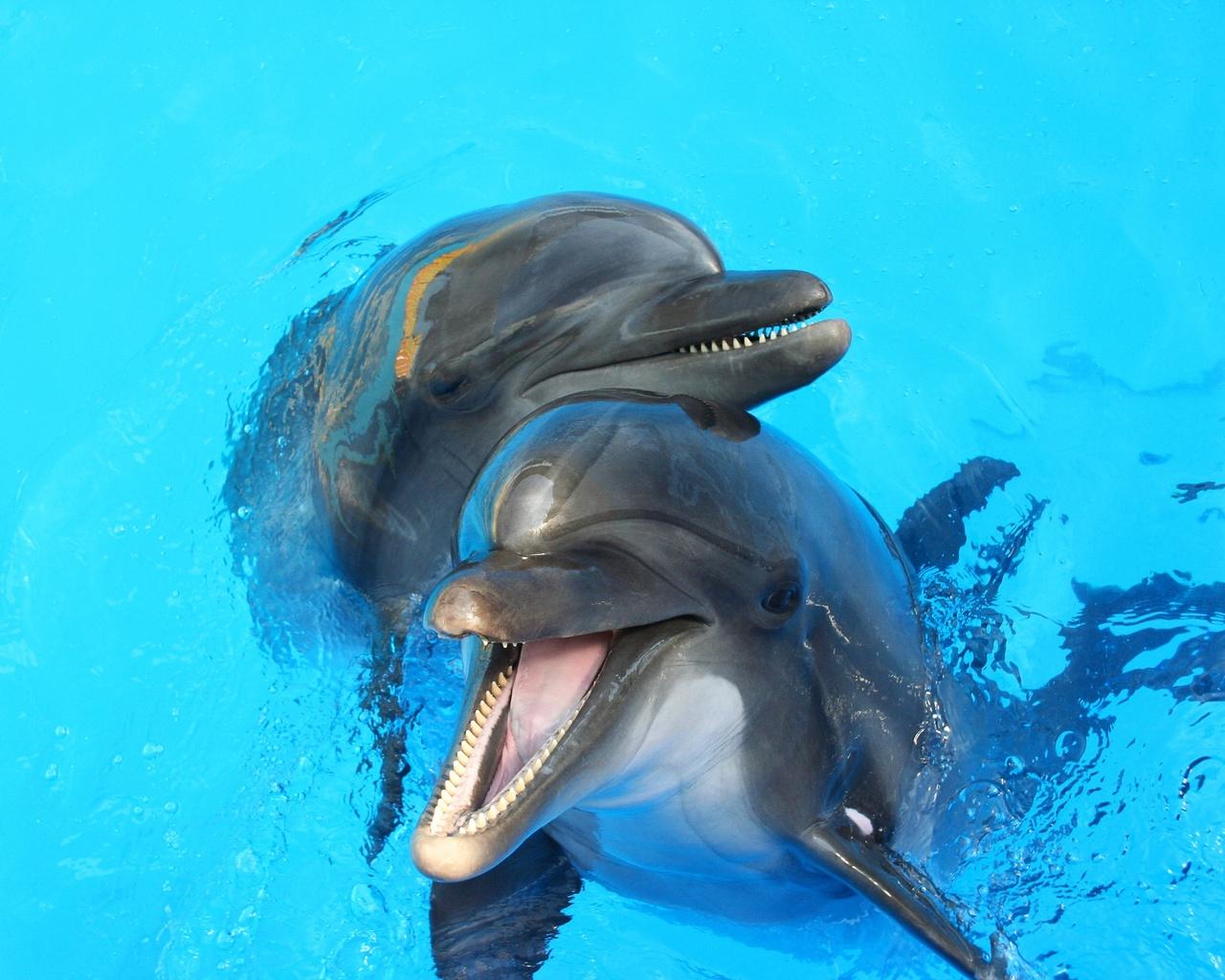 вода, дельфины, друзья, игра
