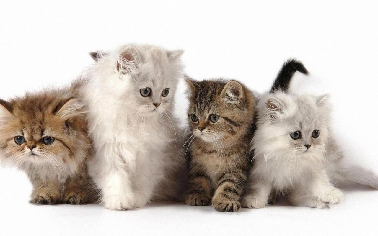животные, кошки