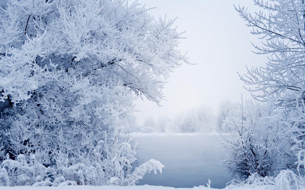 природа, пейзаж, зима, деревья, кусты, снег