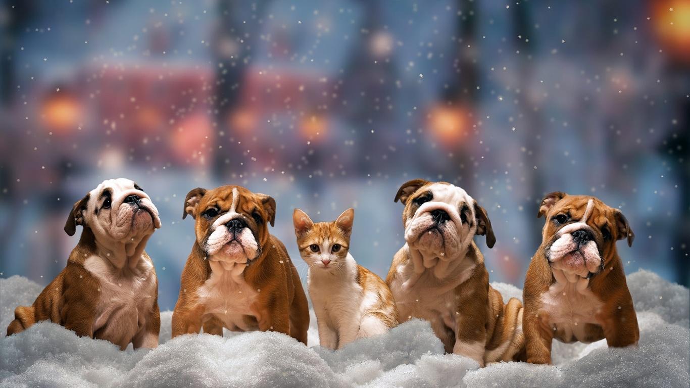животные, собаки, бульдог, котёнок, зима, снег