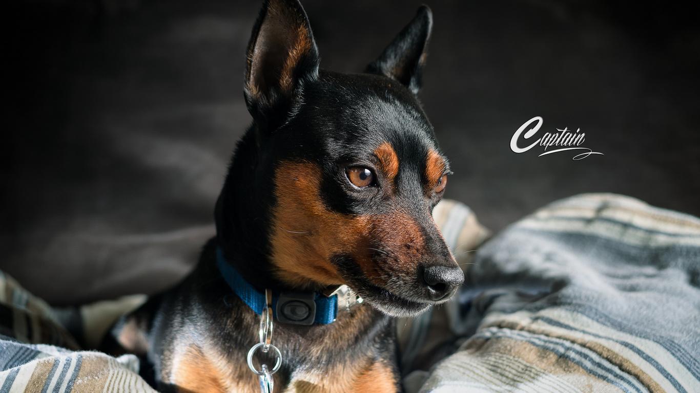 взгляд, собака, друг