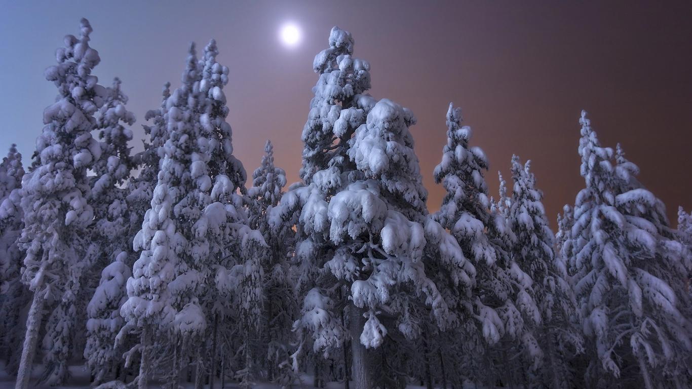 зима, лес, снег, деревья, пейзаж, ночь, природа, луна, ели, финляндия, andrey chabrov