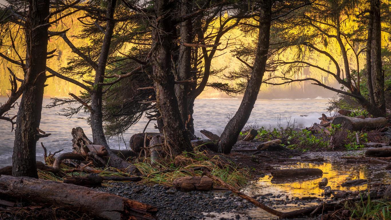 деревья, природа, река