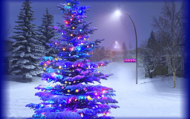 вечер, снег, елка, иллюминация