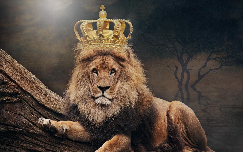 лев, король, корона