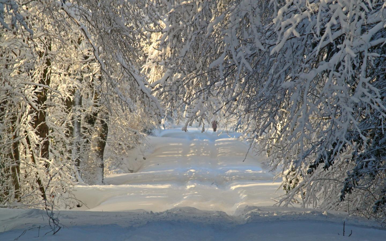 природа, пейзаж, зима, деревья, ветки, снег, тропинка