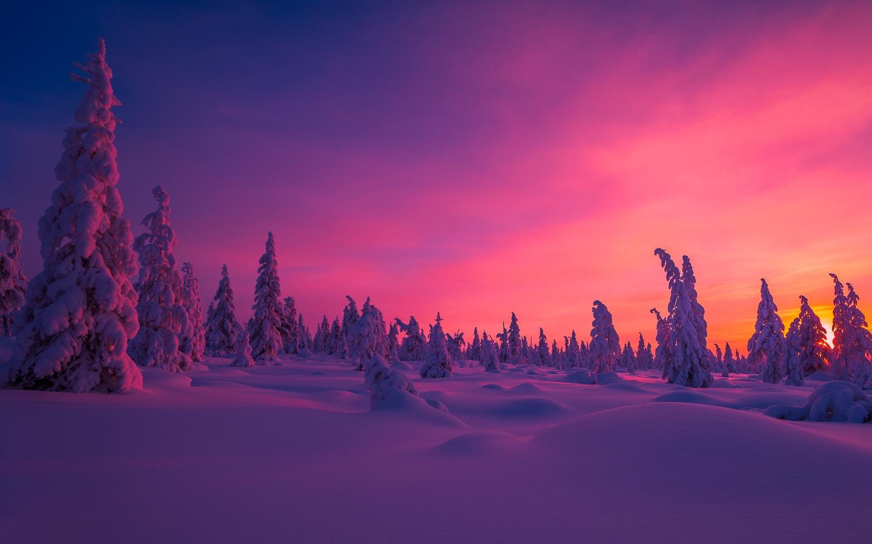 зима, лес, ёлки, снег