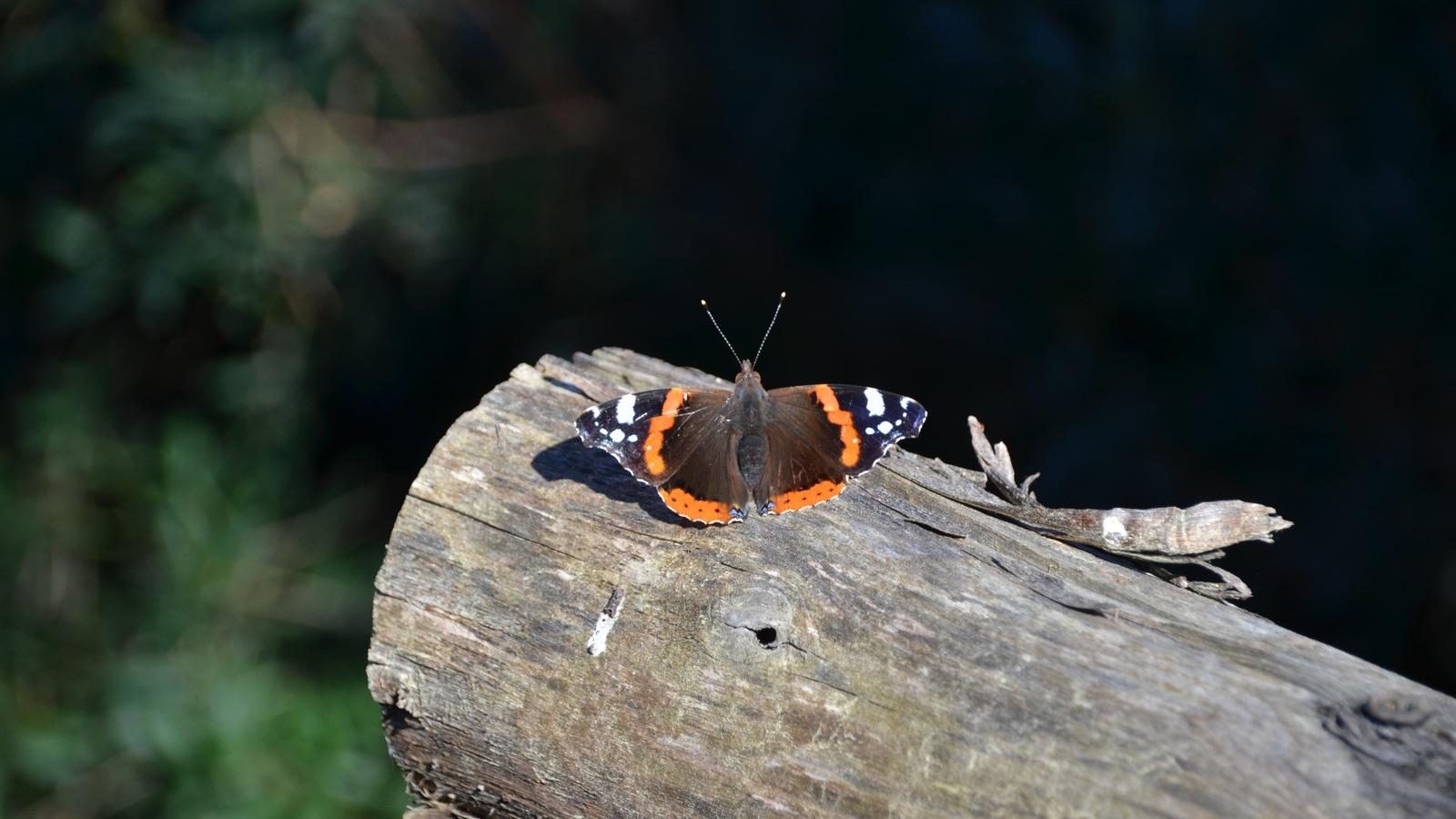 бабочка, бревно, композиция