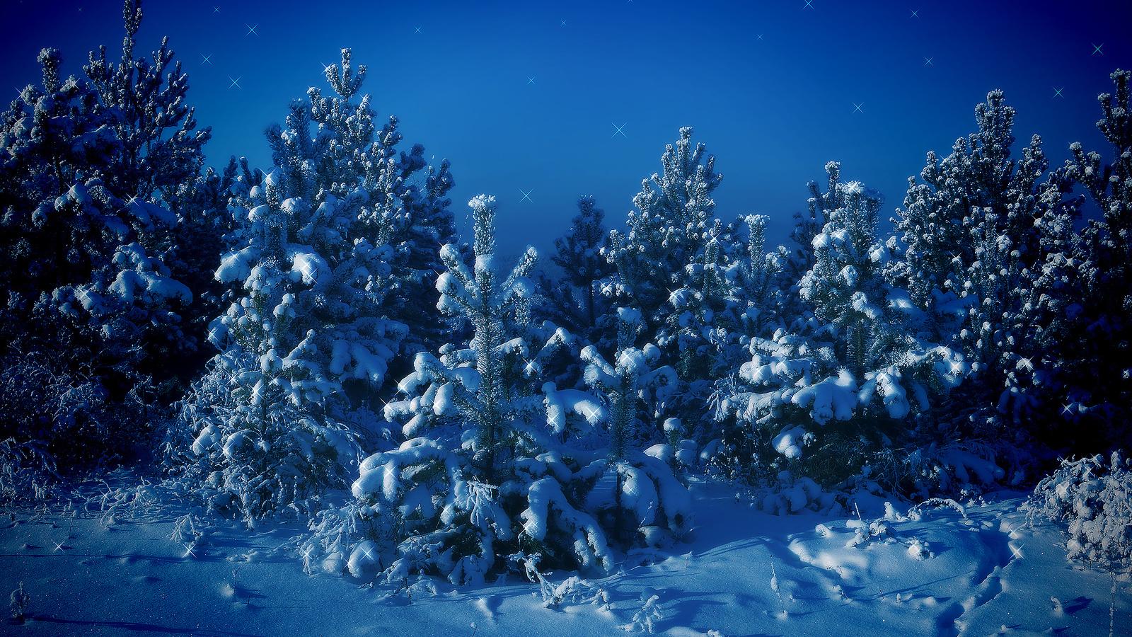 природа, пейзаж, зима, снег, деревья, ели, ёлки, ночь, искры
