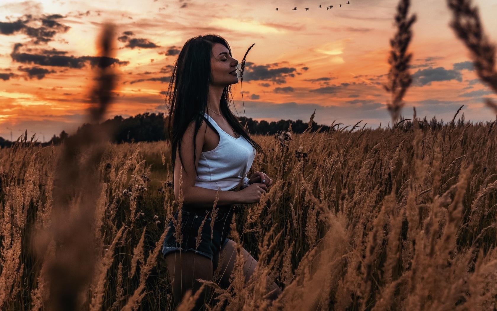 девушка, поле, трава, закат, вечер