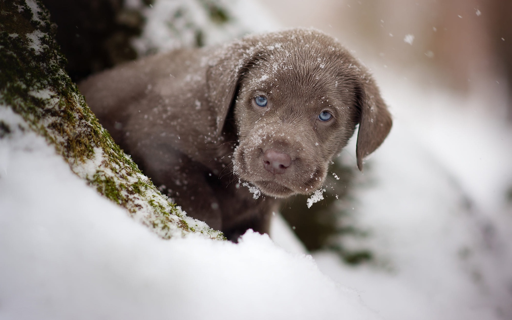 животное, собака, щенок, взгляд, зима, снег