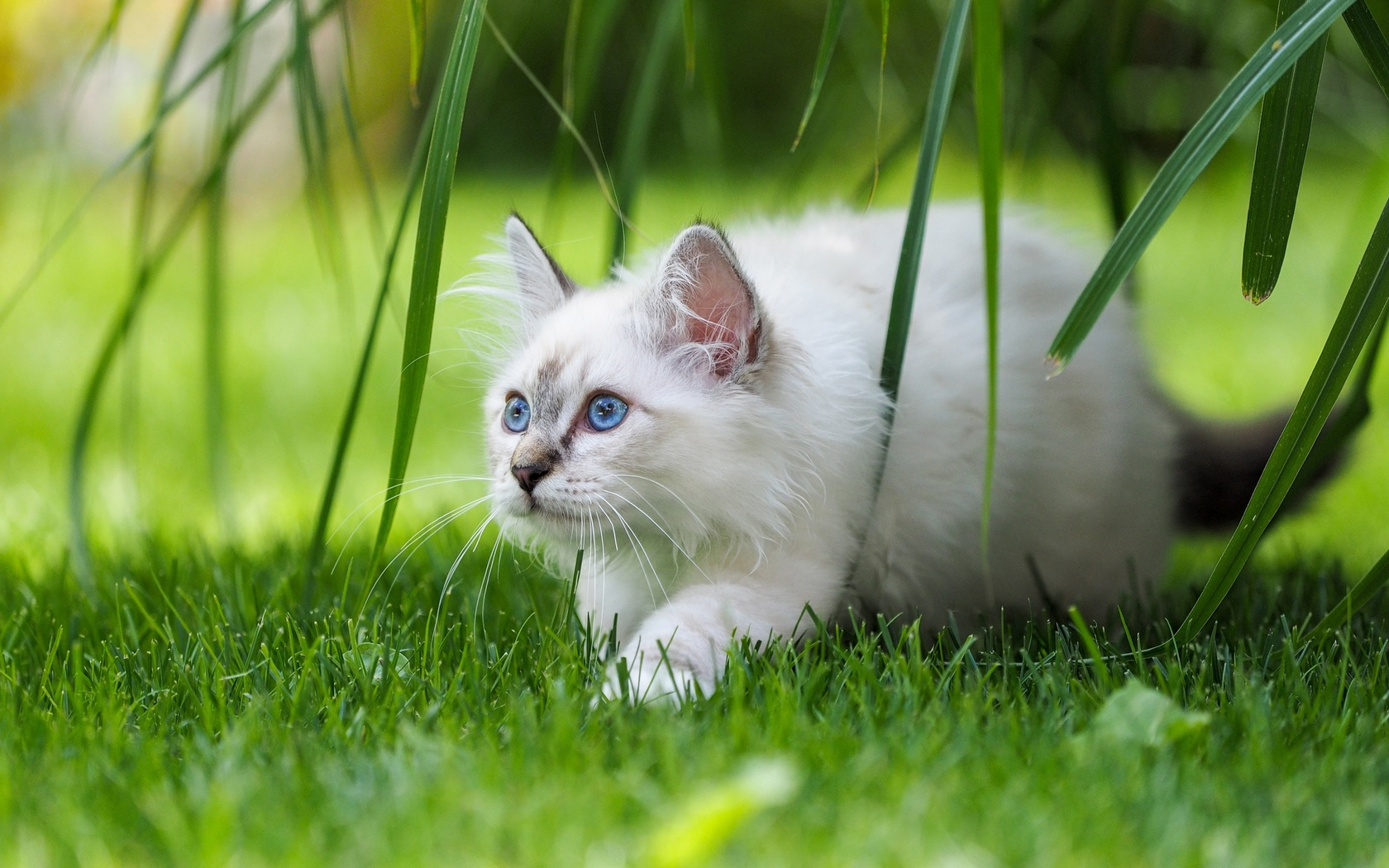 животное, кот, кошка, природа, трава, листья