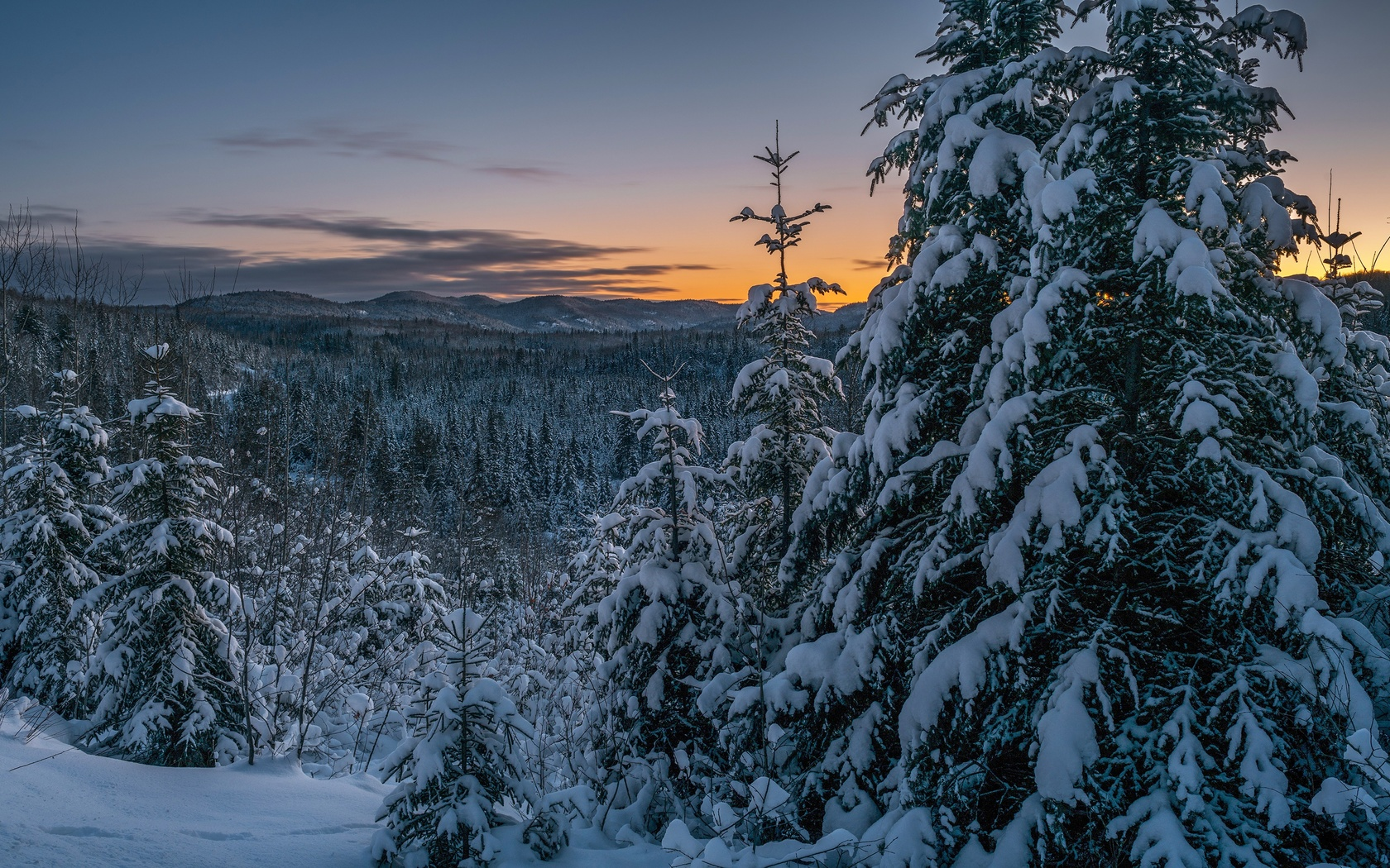 зима, лес, снег, пейзаж, природа, ели, закат