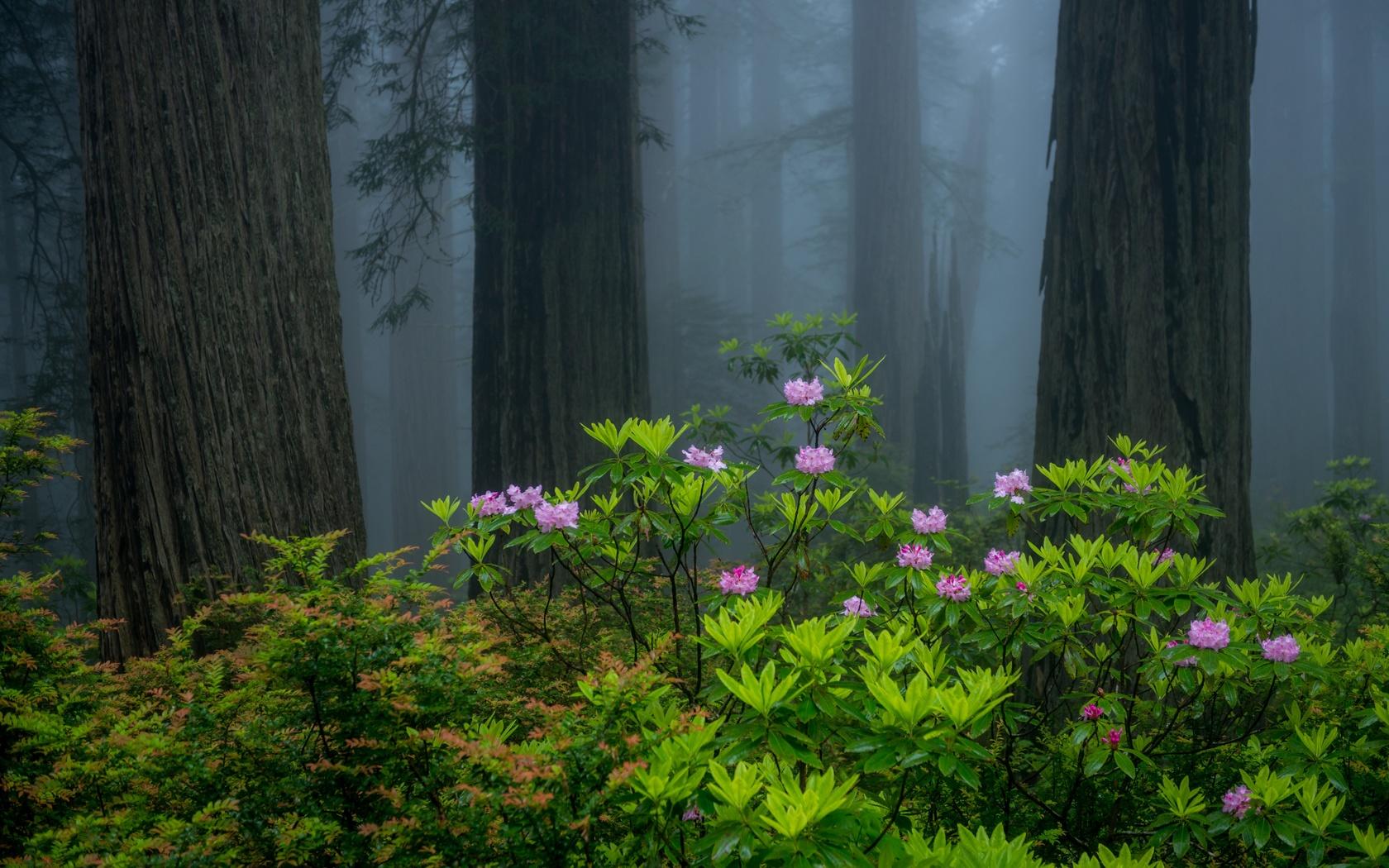 лес, деревья, природа, цветы