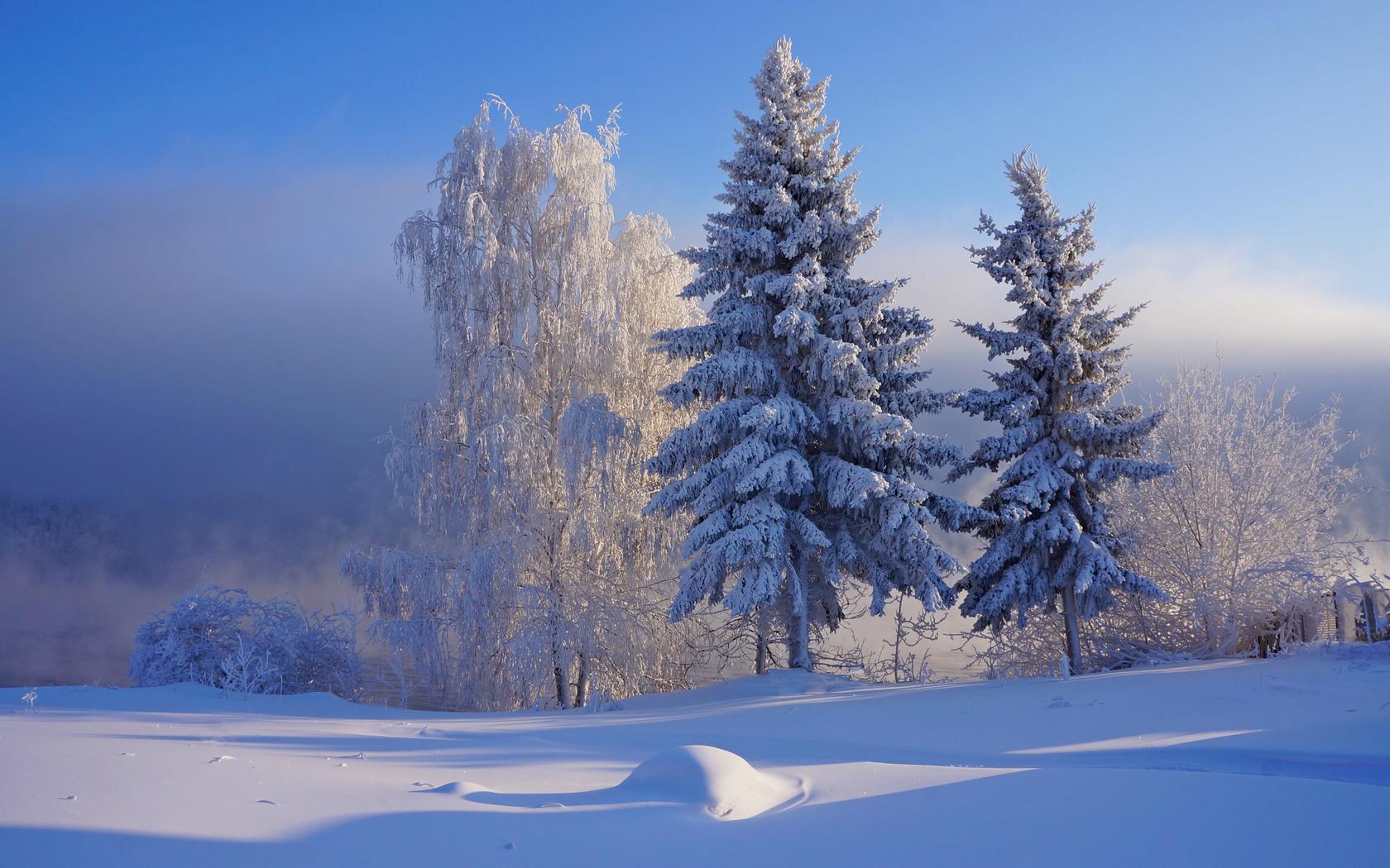природа, пейзаж, зима, снег, сугроб, деревья, ели, берёза, иней, кусты, тени