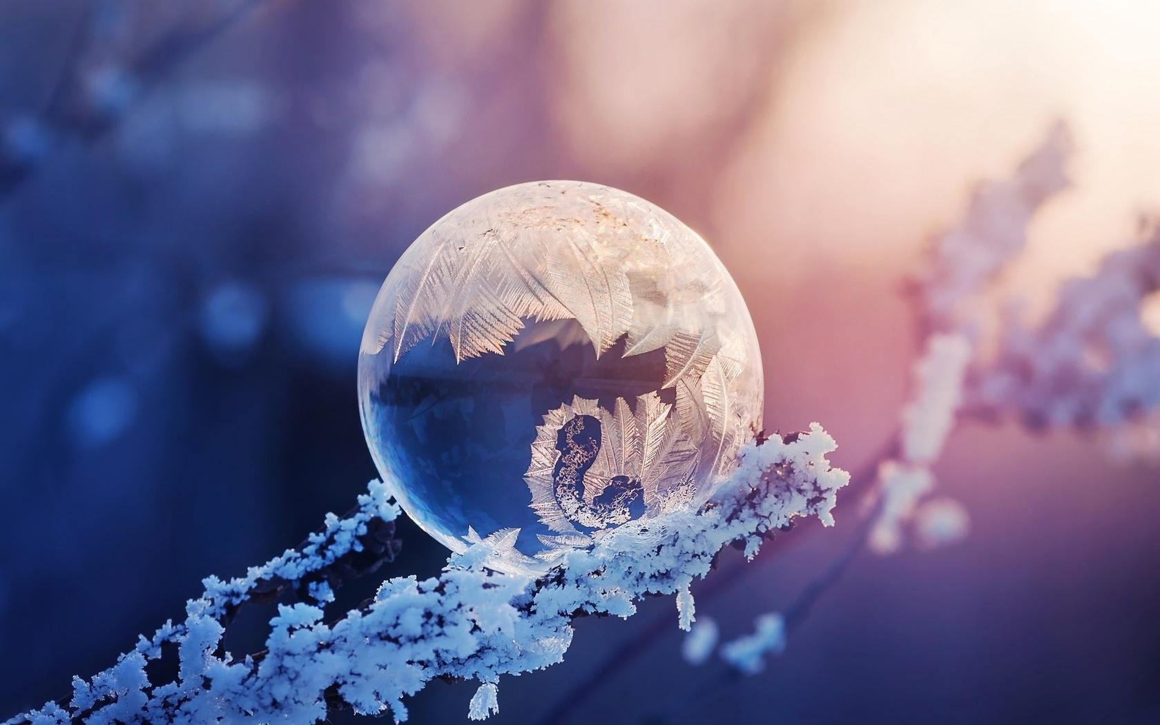иней, макро, ветки, узор, мороз, боке, мыльный пузырь