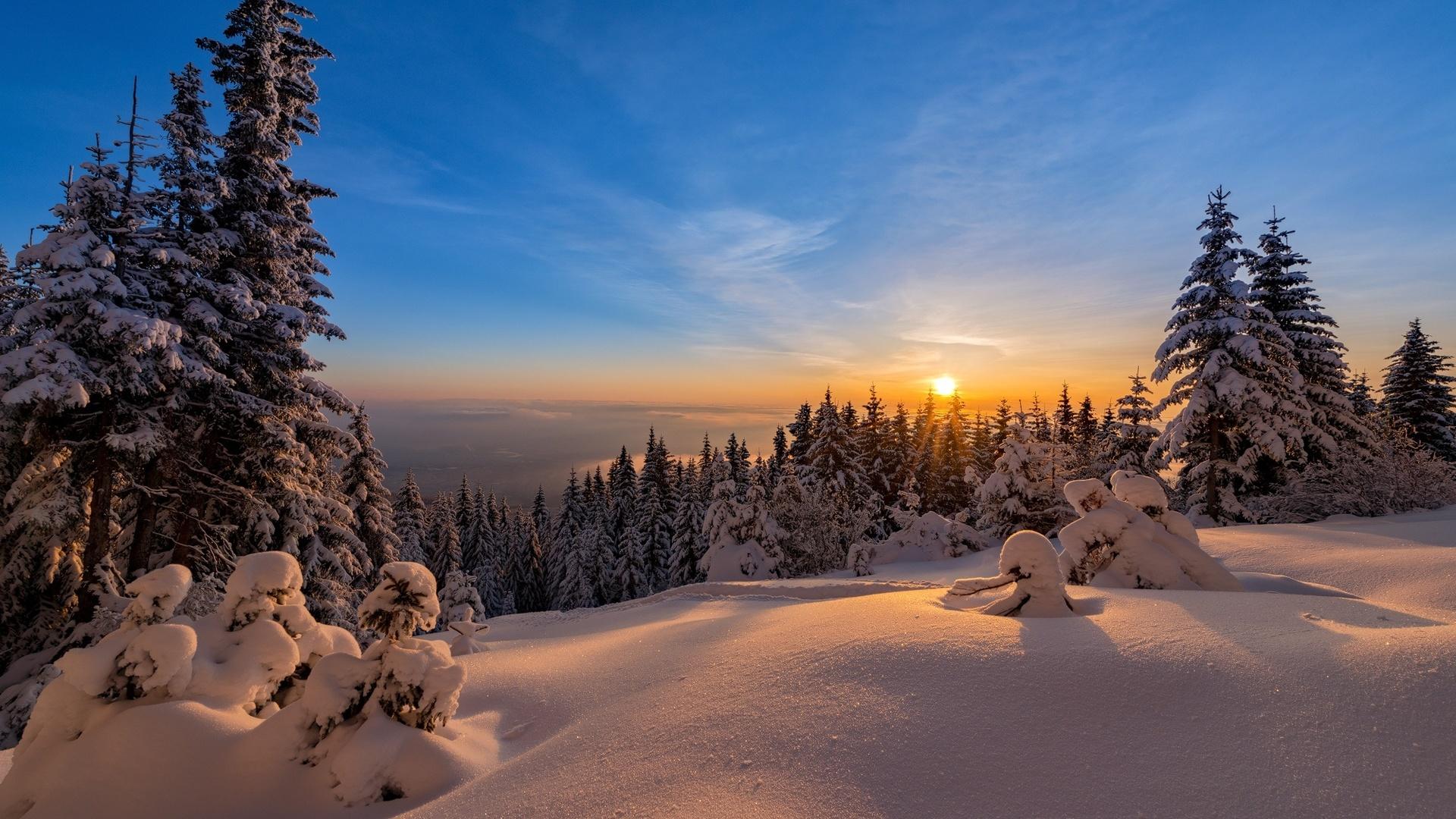 природа, пейзаж, зима, снег, деревья, ели, солнце, закат