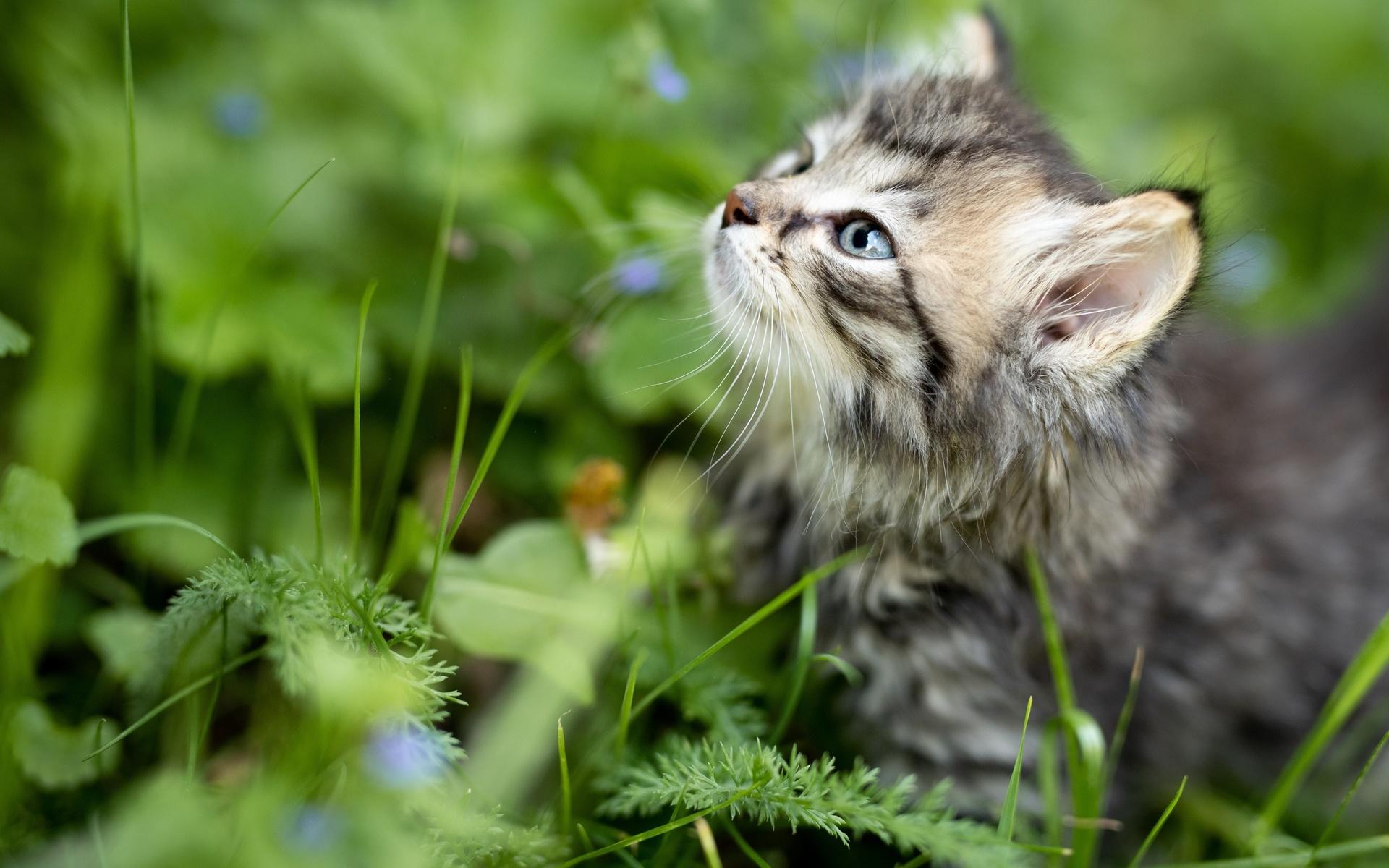 трава, взгляд, котенок