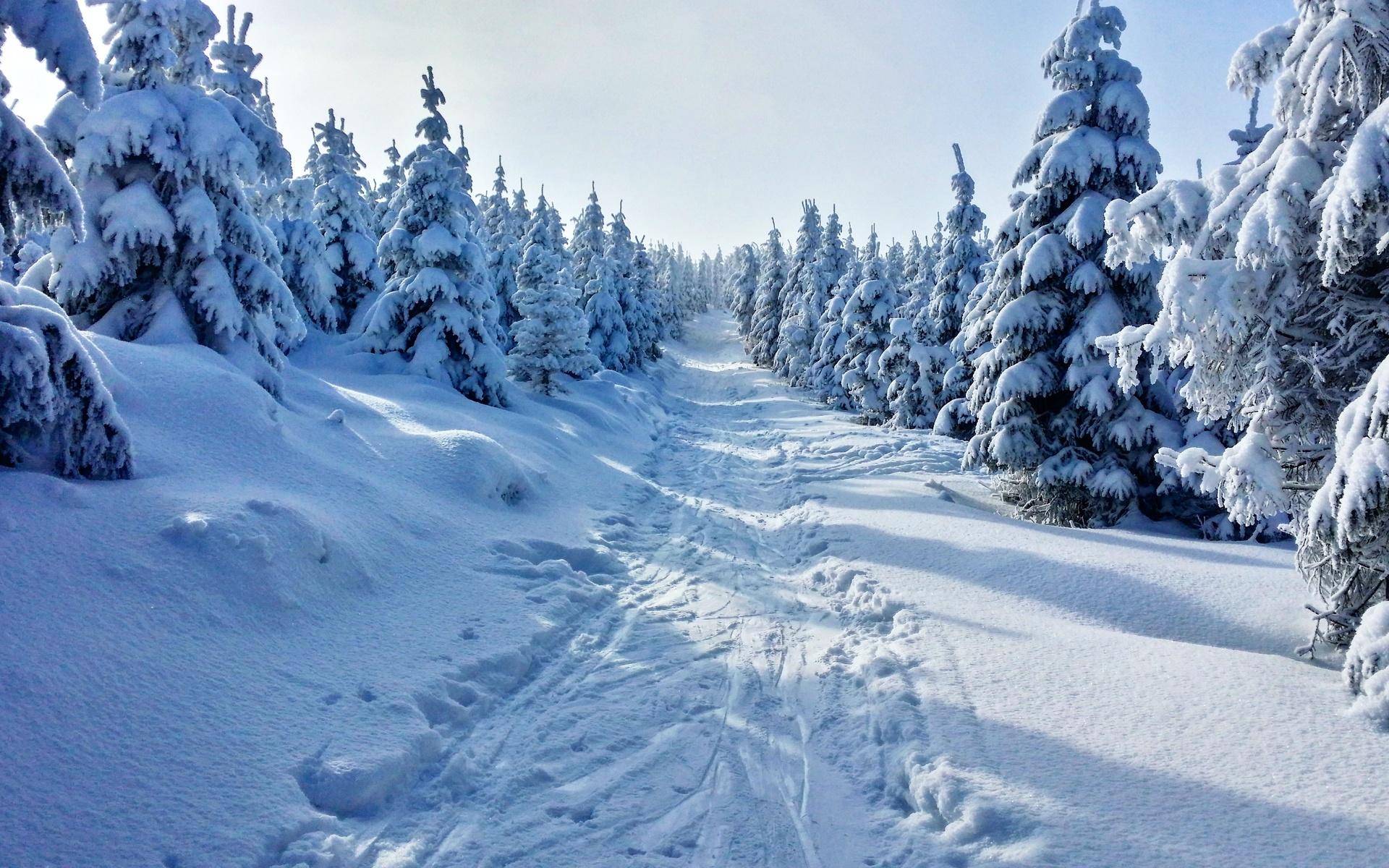 природа, пейзаж, зима, деревья, ели, снег, дорога