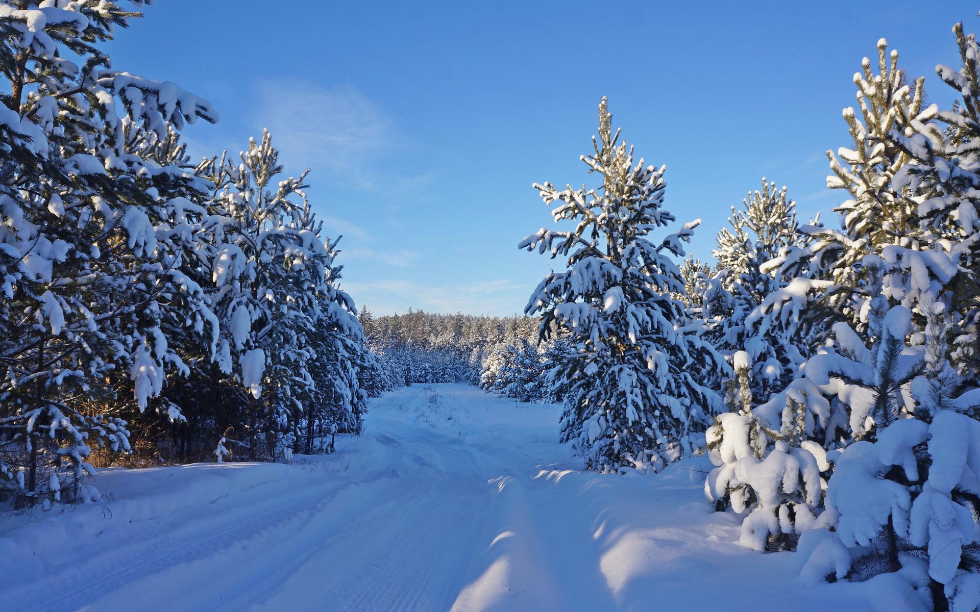 природа, пейзаж, зима, снег, сугробы, деревья, ели, лес, дорога