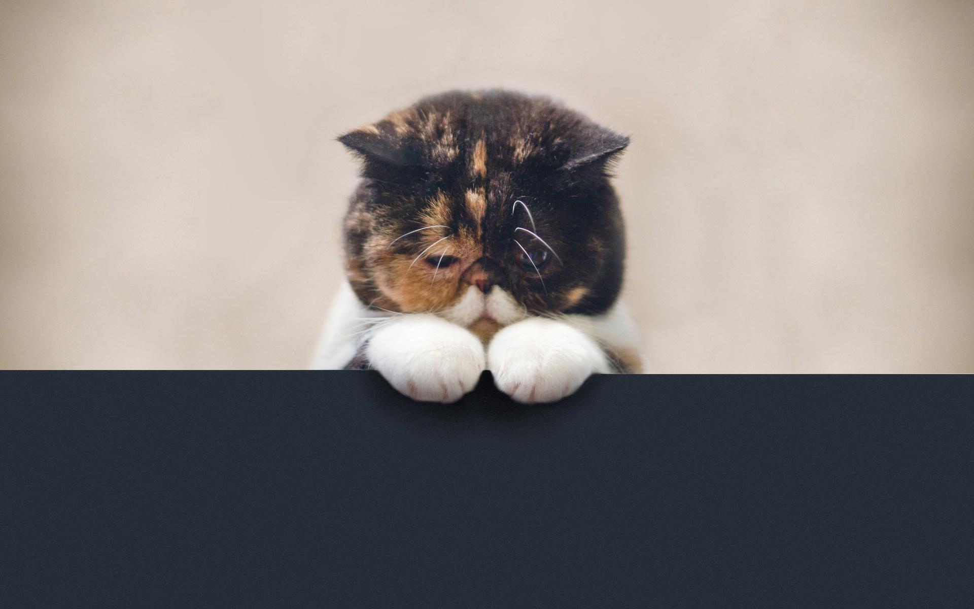кот, позитив