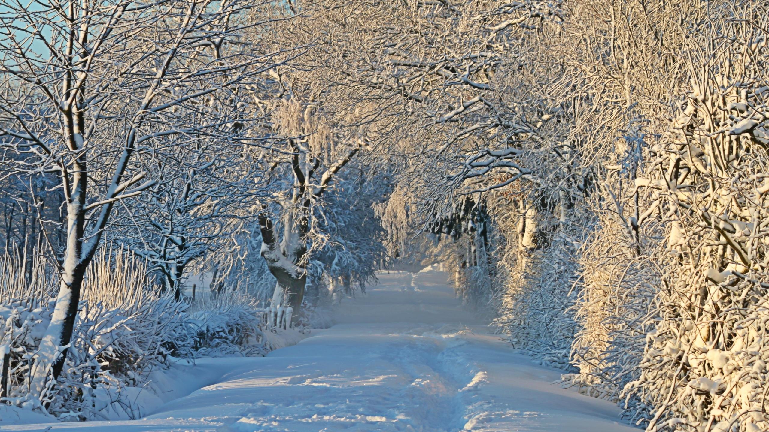 природа, пейзаж, зима, деревья, снег, аллея, тропинка, кусты