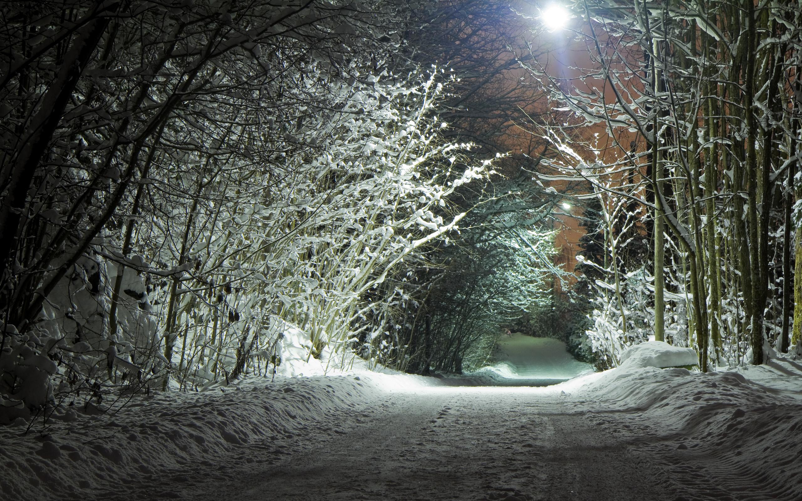 зима, снег, ветки, ночь