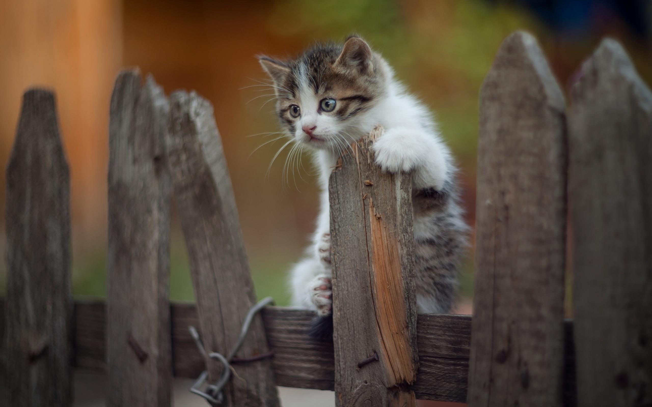 животное, котёнок, малыш, детёныш, забор