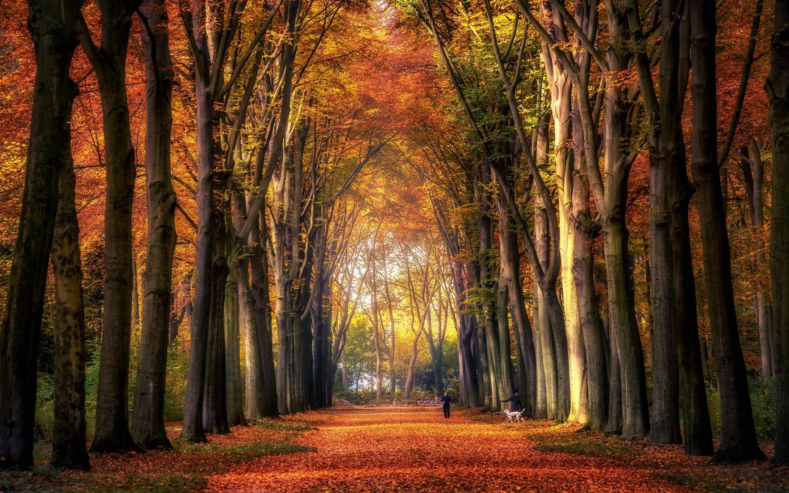 парк, аллея, собака, осень