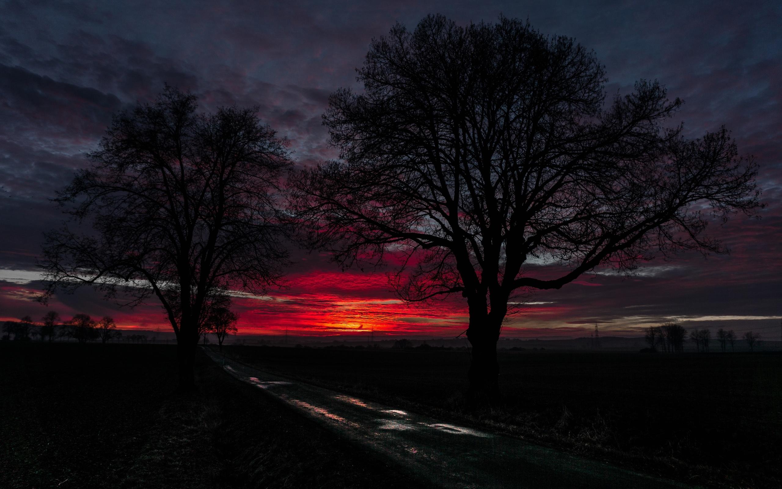 закат, облака, деревья, дорога, горизонт