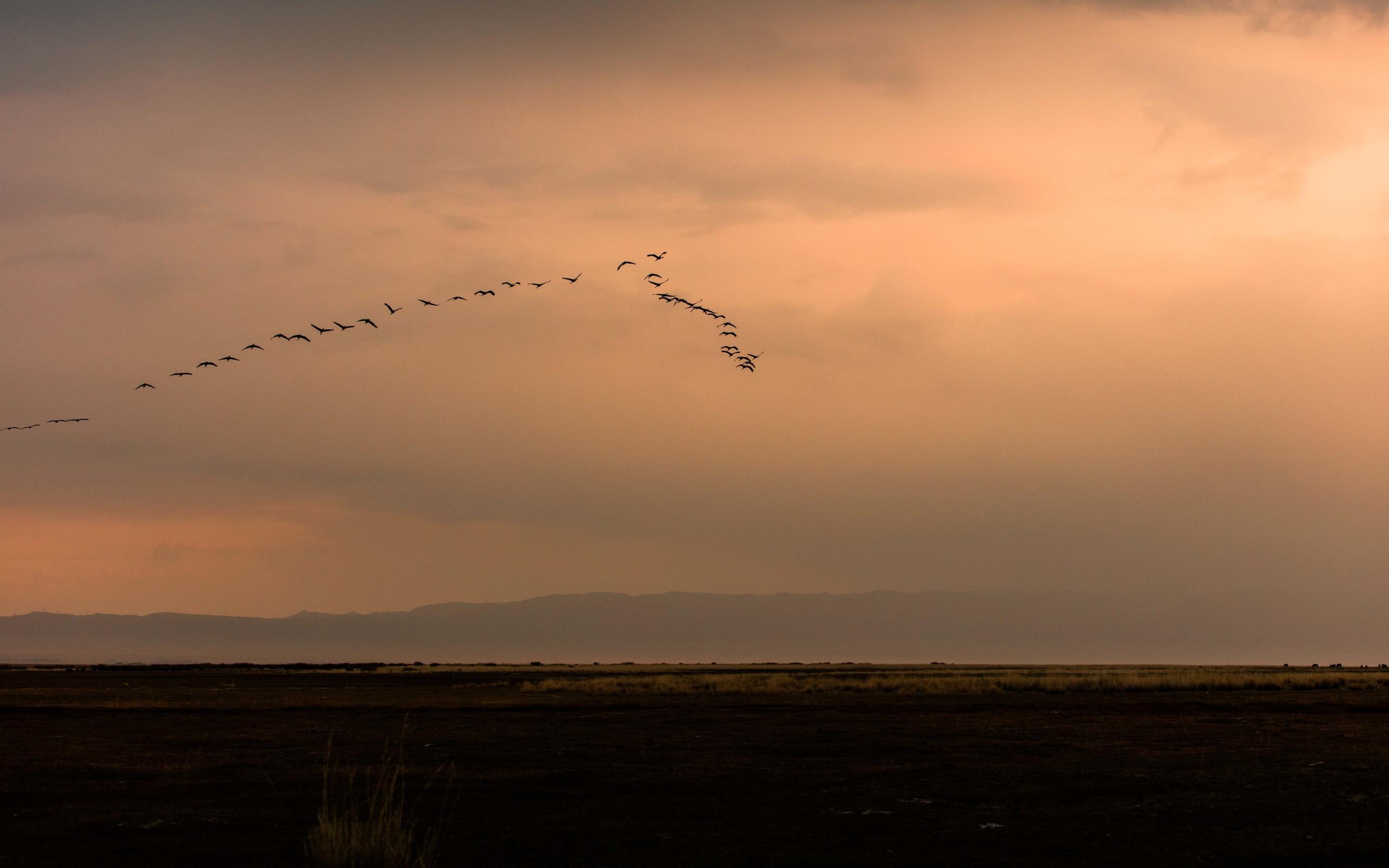 птицы, природа, полёт, небо