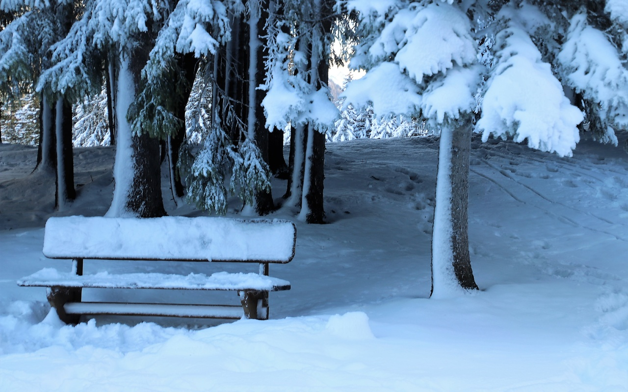снег, парк, деревья, скамейка, зима