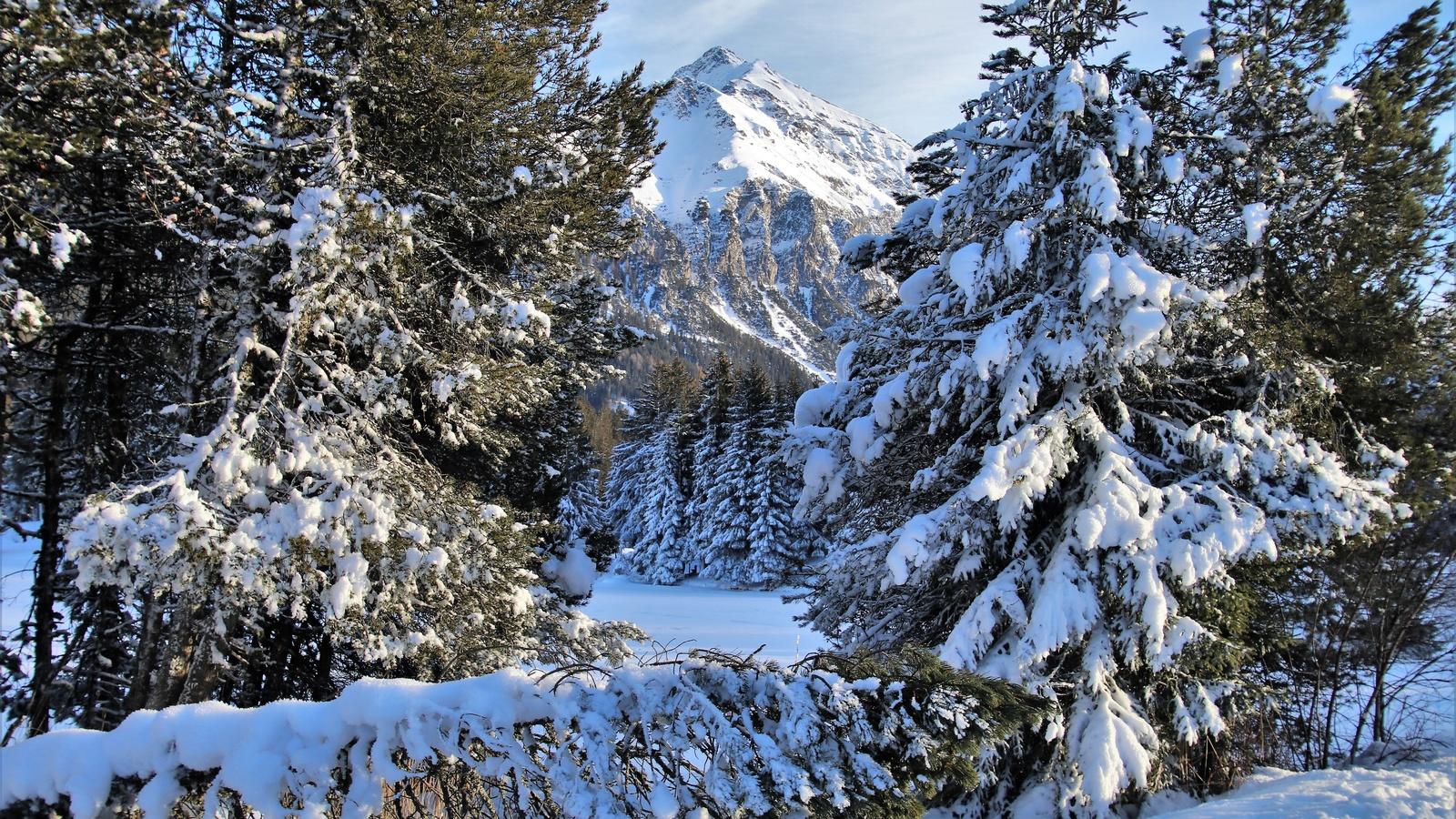 лес, снег, горы, небо