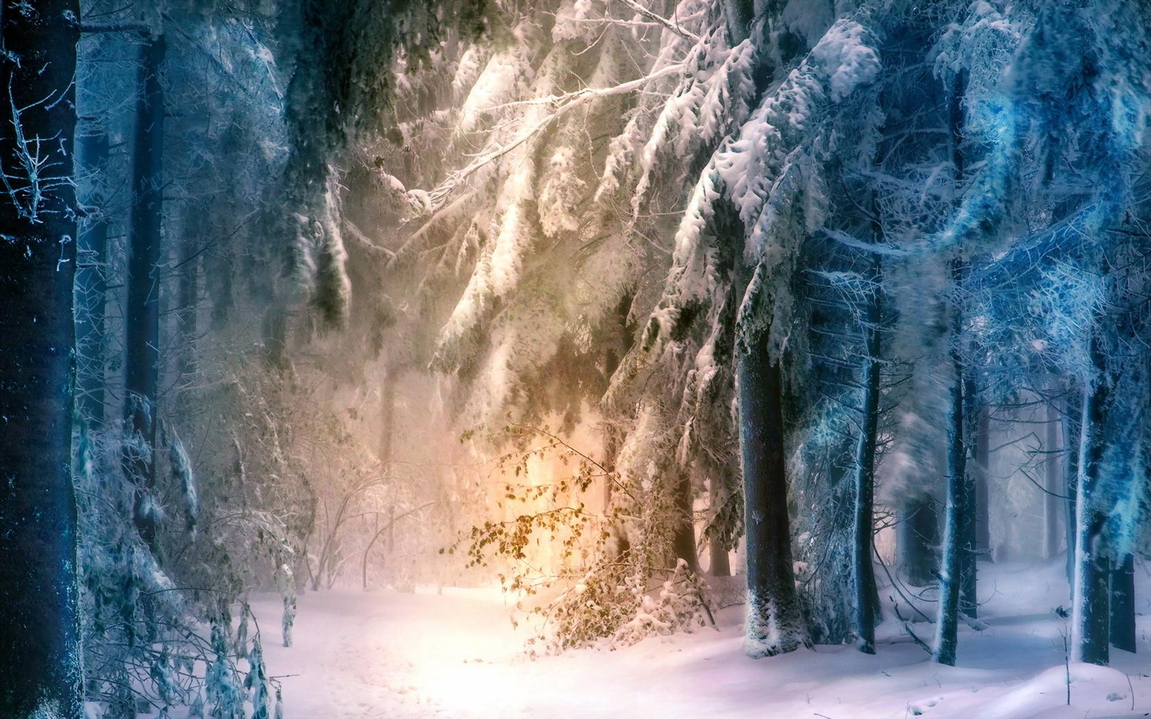 природа, зима, снег, лес, деревья, туман, свет