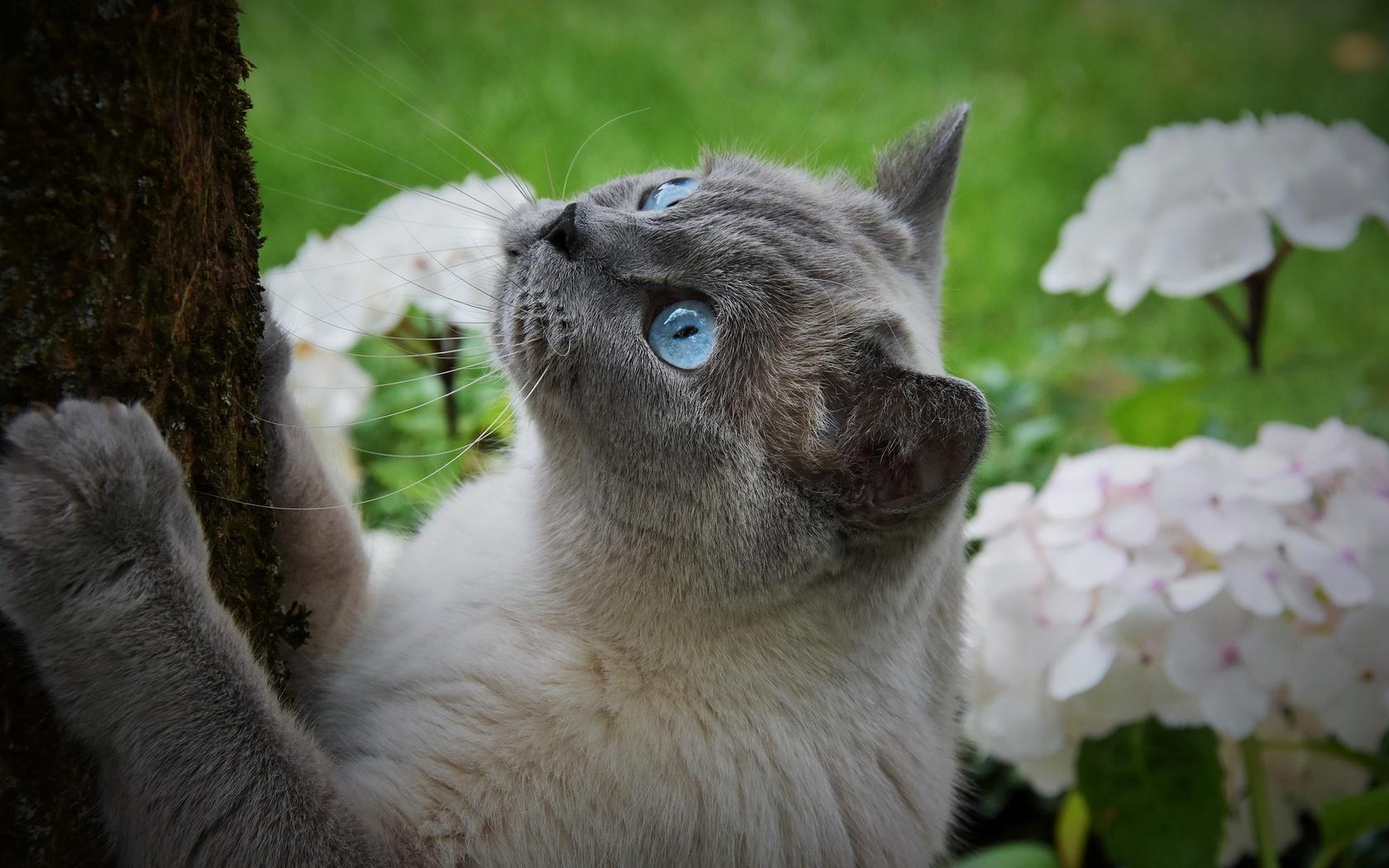 животное, кот, кошка, природа, ствол, дерево, цветы, лето