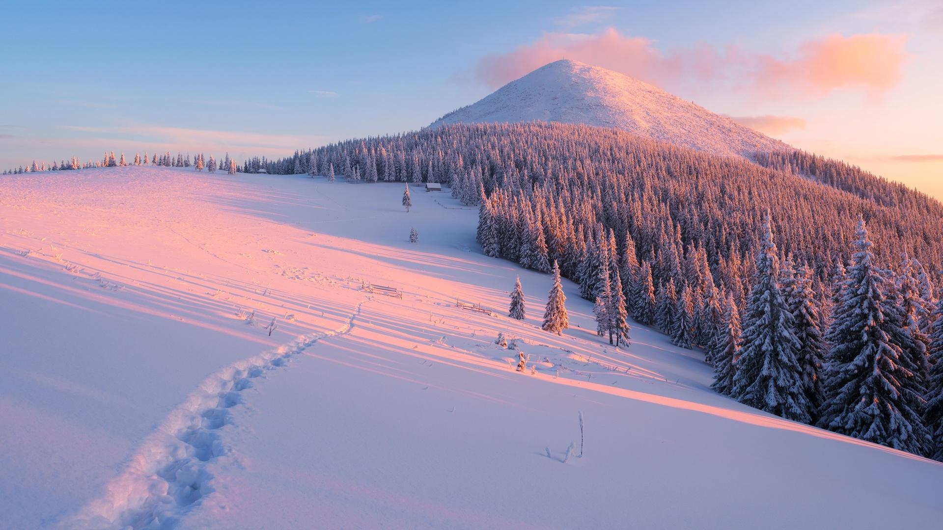 природа, пейзаж, горы, холмы, леса, деревья, ели, склон, снег, зима, рассвет, тропинка, тени