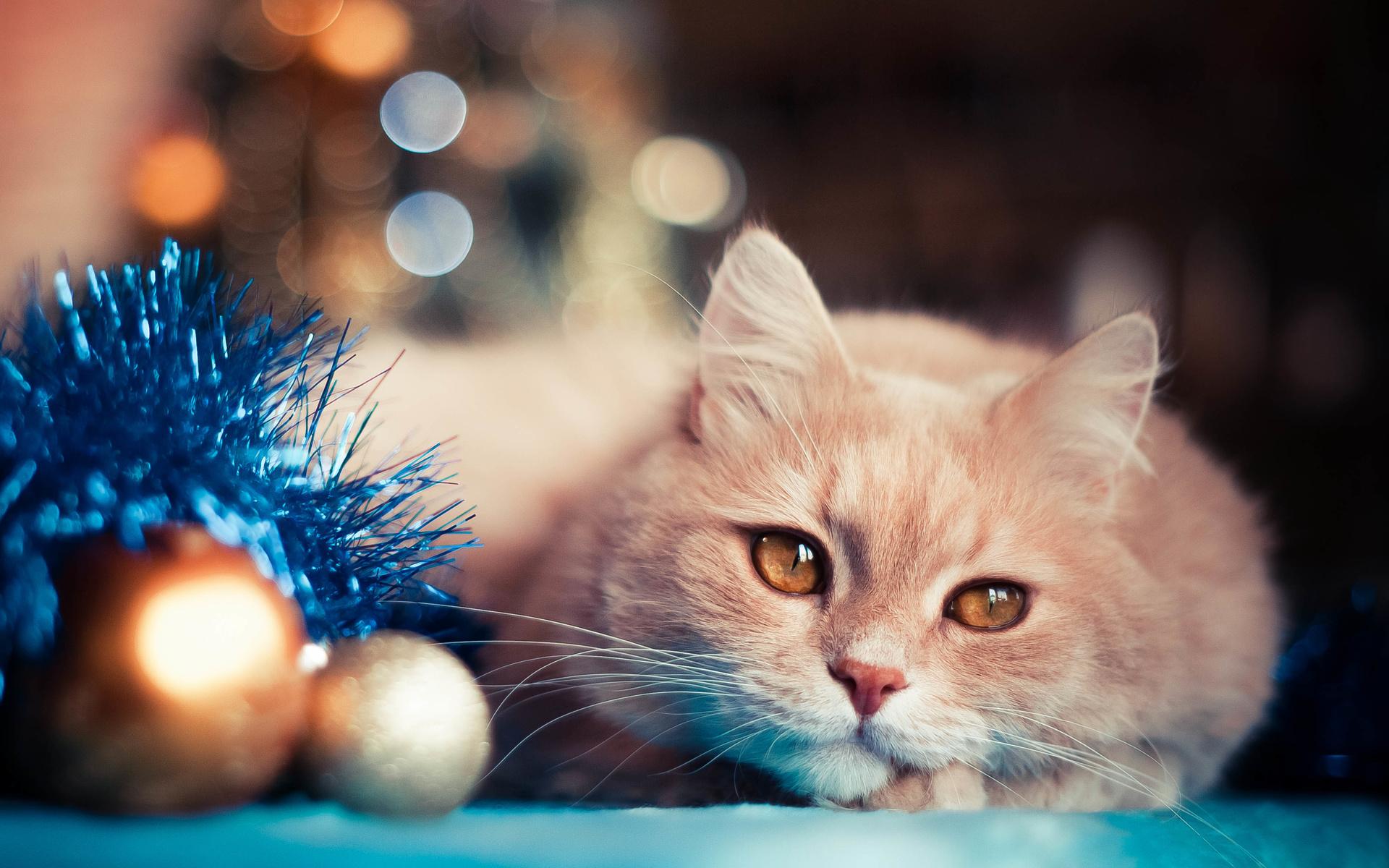 Открытку для, новогодняя картинка с котами