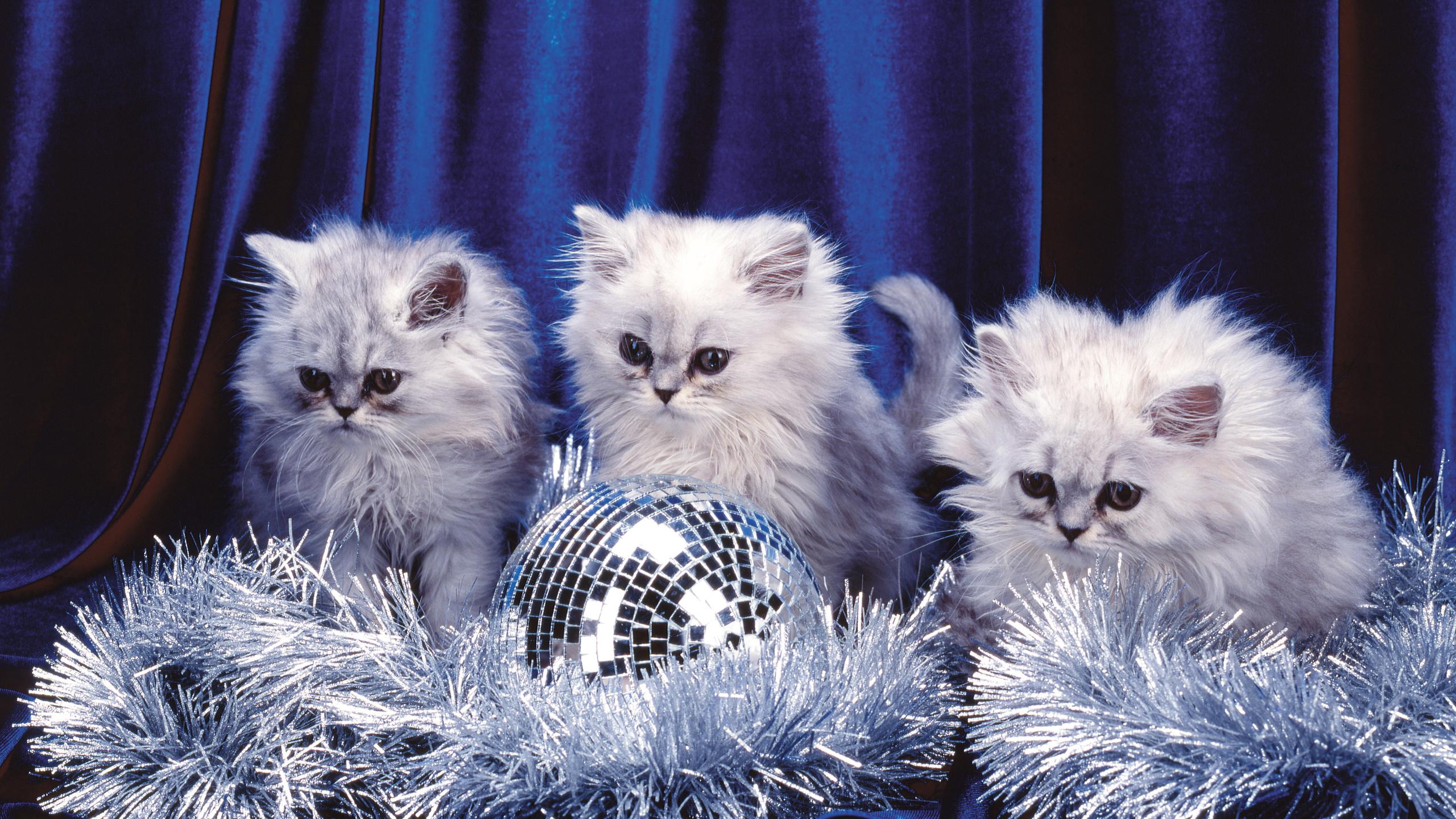 Викуля, открытки с новым годом котенком
