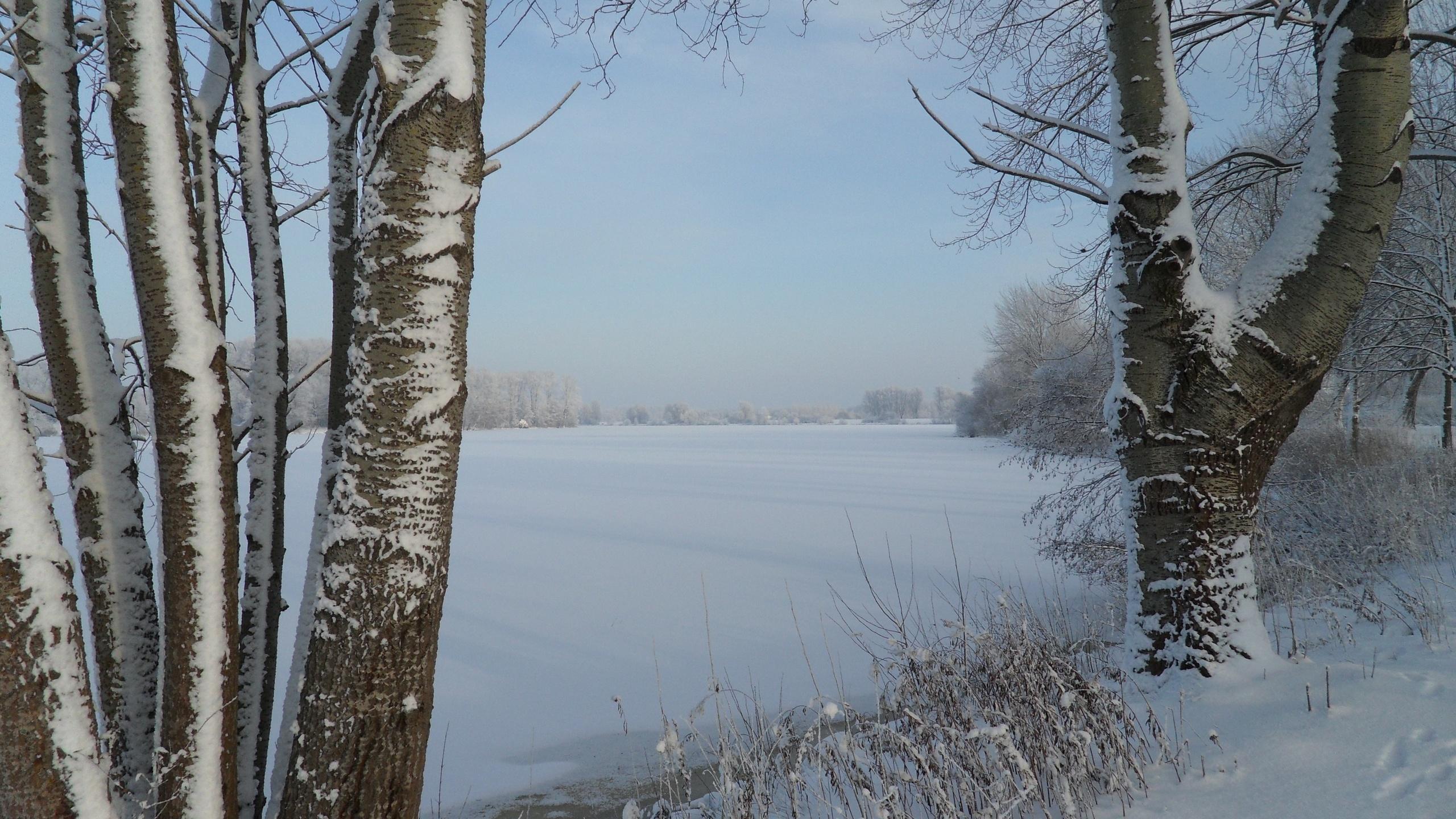 природа, пейзаж, озеро, деревья, трава, зима, снег, следы